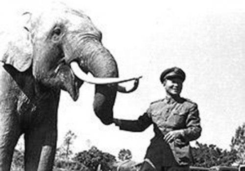 10 Животных, сделавших себе потрясающую военную карьеру