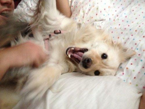 Забавные фотографии с собаками (33 шт)