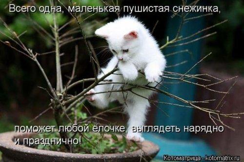 Сборник весёлых котоматриц (35 шт)