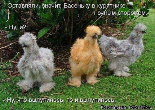 Котоматрица 1362687767_veselye-kotomatricy