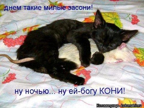 Котоматрица 1362687779_veselye-kotomatricy-2