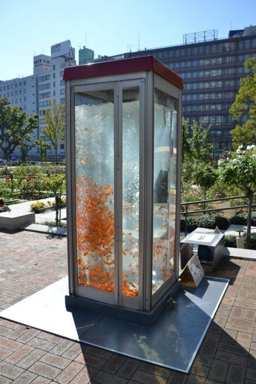Золотые рыбки в телефонных будках в Японии (9 фото)