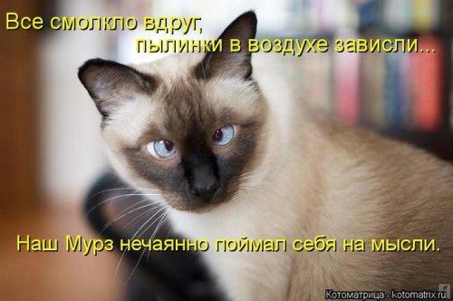 Новая порция весёлых котоматриц (19 шт)