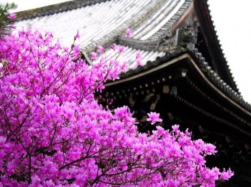 В Японии на декаду раньше обычного зацвела сакура (26 фото)