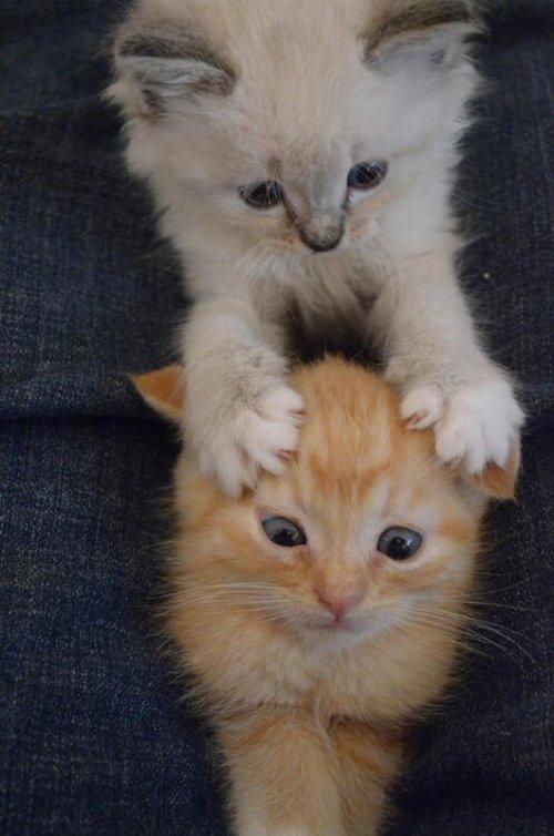 Breakinqwarning! my blog may cause joy Kitty Let me watch youtube