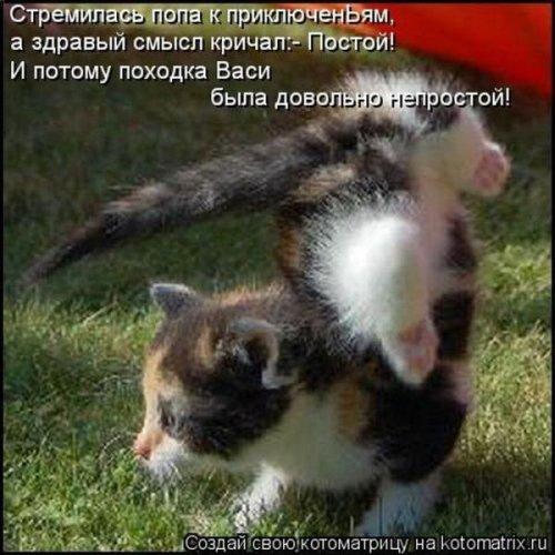 Новые прикольные котоматрицы (35 шт)
