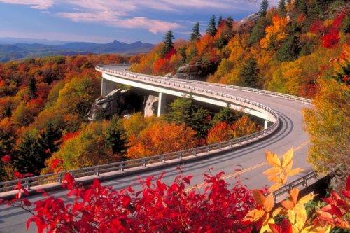 6 Невероятных дорог, пролегающих над кронами деревьев