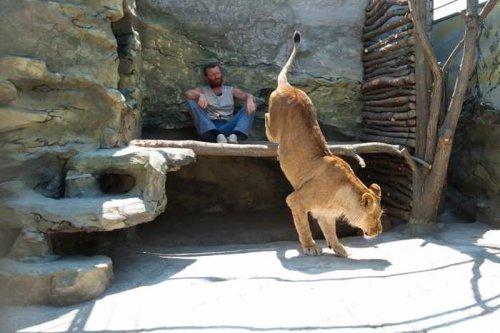 Владелец частного зоопарка планирует провести год в компании львов