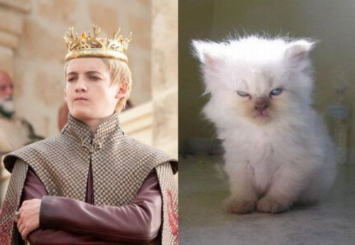Игра престолов в исполнении котов (18 фото)