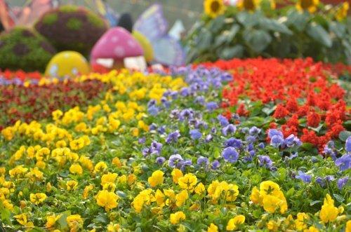 Цветочная феерия на Hong Kong Flower Show 2013 (25 фото)