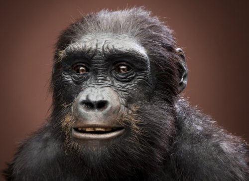 10 Переходных предков эволюции человека
