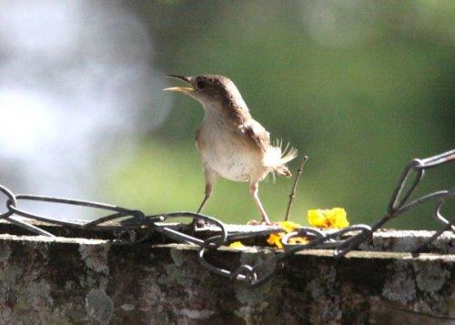 10 Шокирующих или удивительных примеров поведения птиц