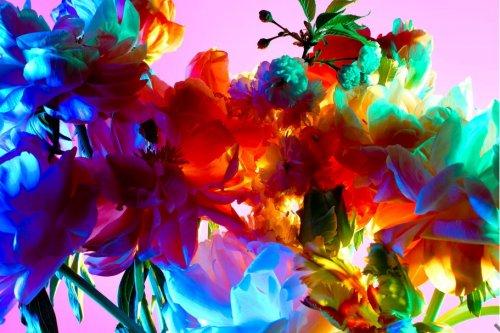Зажигательные цветочные портреты, созданные датским фотографом Торкилом Гуднасоном (13 шт)