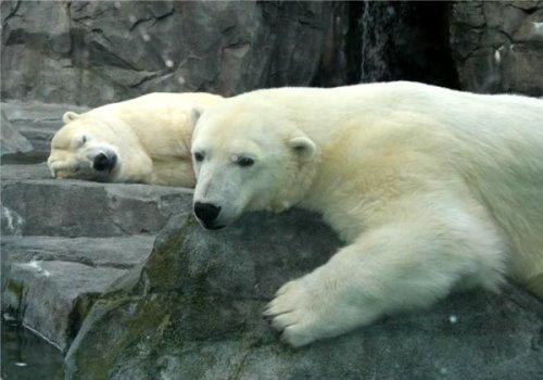 10 Ужасающих несчастных случаев в зоопарках