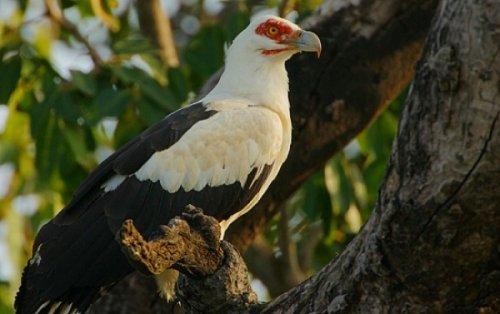 10 Странных случаев невероятной эволюции животных