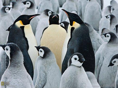 Коллекция лучших фотографий от National Geographic (22 шт)
