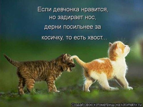 Новые смешные котоматрицы (22 шт)