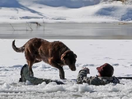 10 Самых преданных собак