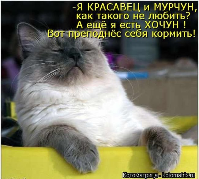 http://www.bugaga.ru/uploads/posts/2013-04/1365188954_novye-kotomatricy.jpg