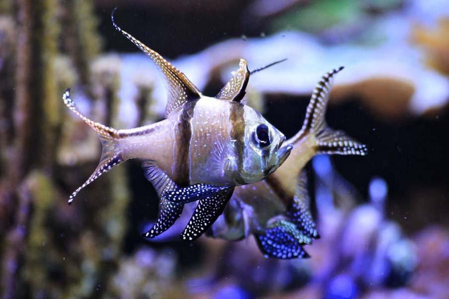Картинки про рыб из сказок оно ещё