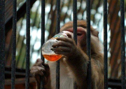 Топ-10: Примеры ареста животных