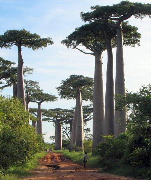 7 Уникальных лесов со всего мира