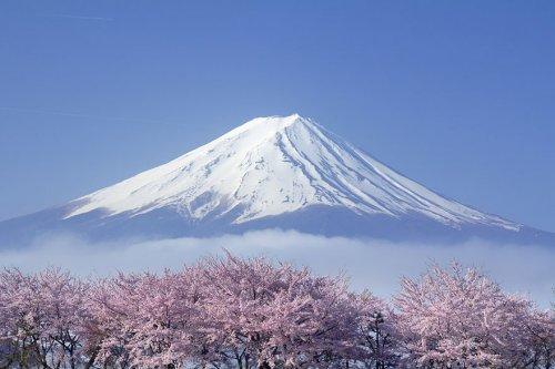 Восхитительные фотографии цветущей сакуры (18 фото)