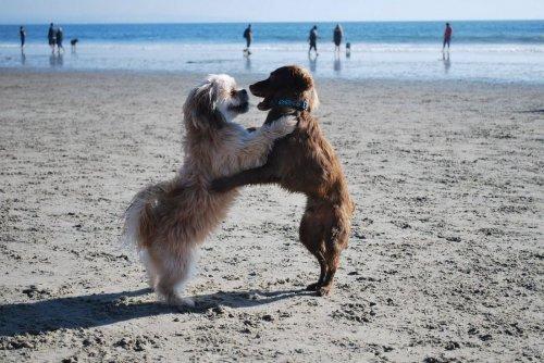 Чудесные фотографии с животными (35 фото)