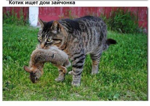 Невероятные случаи взаимопомощи среди животных (9 фото)
