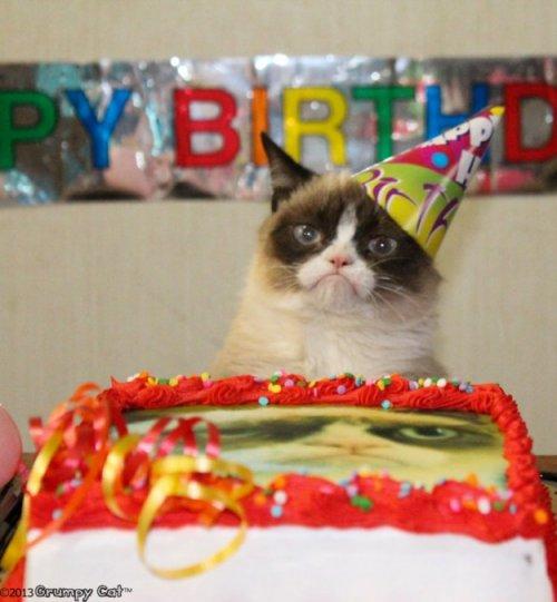 С днём рождения, Grumpy Cat! (5 фото + 1 видео)