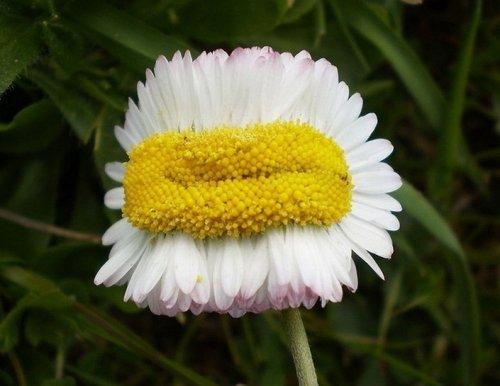 Мутанты среди растений