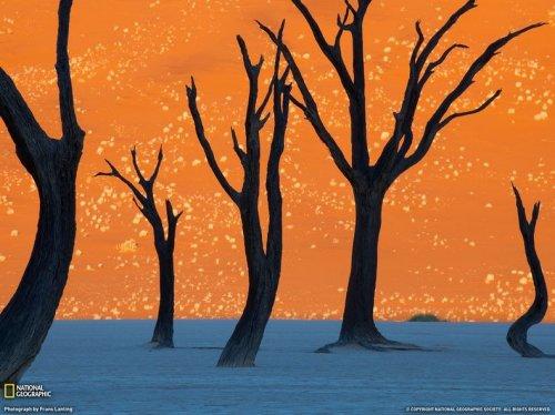 Сюрреалистический ландшафт Дедвлей в Намибии