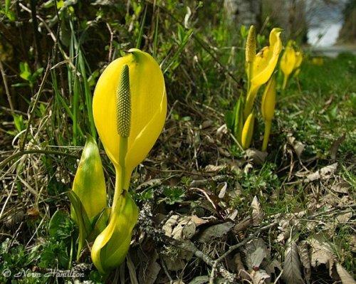 Топ-10: Странные и опасные растения