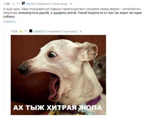 Прикольные картинки на Бугага.ру (47 шт)