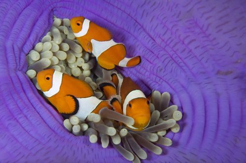 Обитатели подводного мира в объективе Стива Блума (25 фото)
