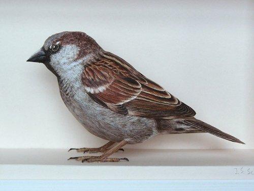 Сверхреалистичные бумажные 3D-модели птиц Йохана Шерфта (7 фото)