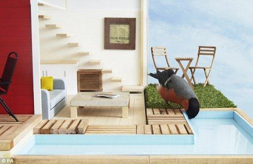 VIP-кормушка для птиц (6 фото)