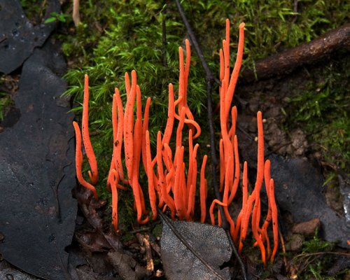 15 Самых красивых и необычных грибов