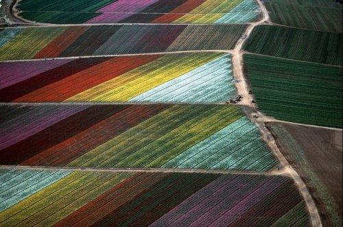 Сельхозугодья, вид сверху: Аэрофотосъёмка Алекса МакЛина (19 фото)