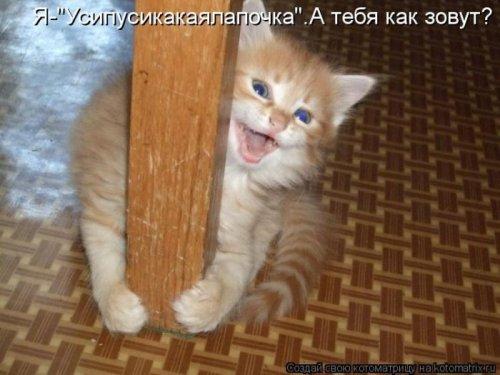 Забавные котоматрицы (32 шт)