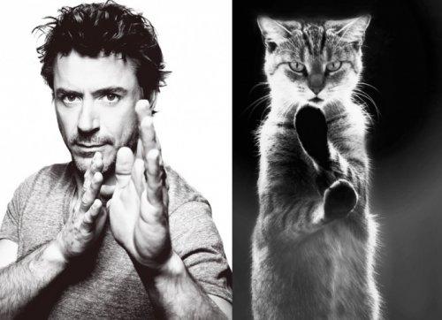 Мужчины и котята (22 фото)
