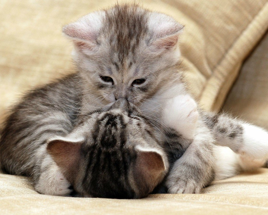 Поцелуи и обнимашки картинки