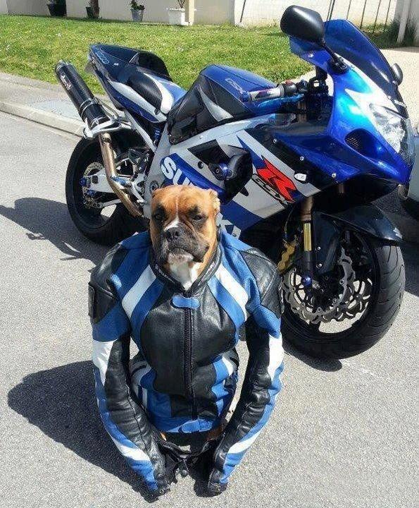 дочерью всегда прикольные картинки с мотоциклами фотографии так