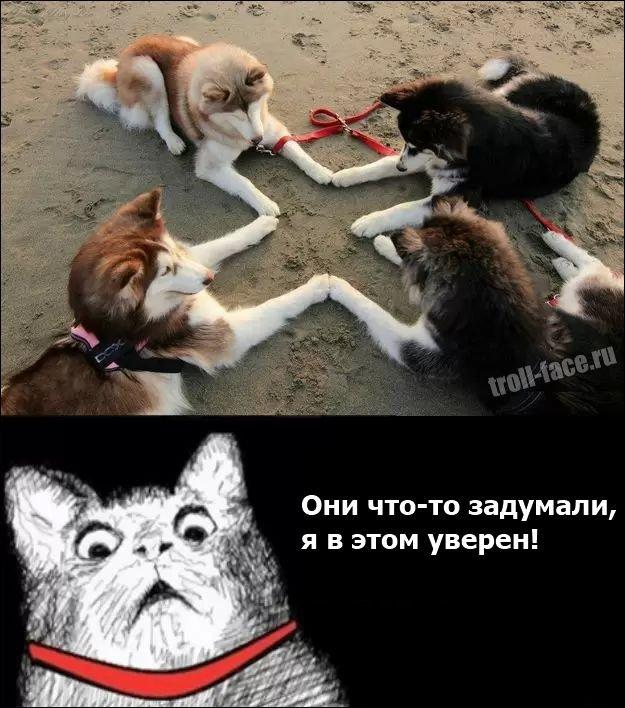 Приколы картинки с надписями комиксы с животными