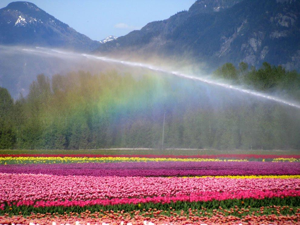 женщин фото природа цветы радугой двух тысяч членов
