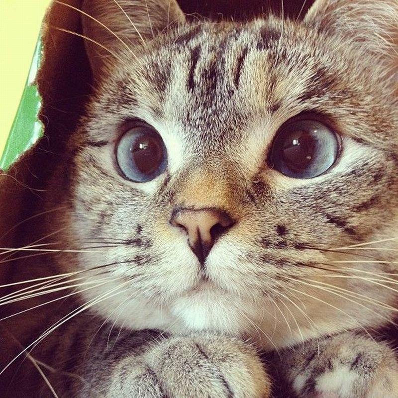 Картинки смешного кота на аву, днем рождения детская