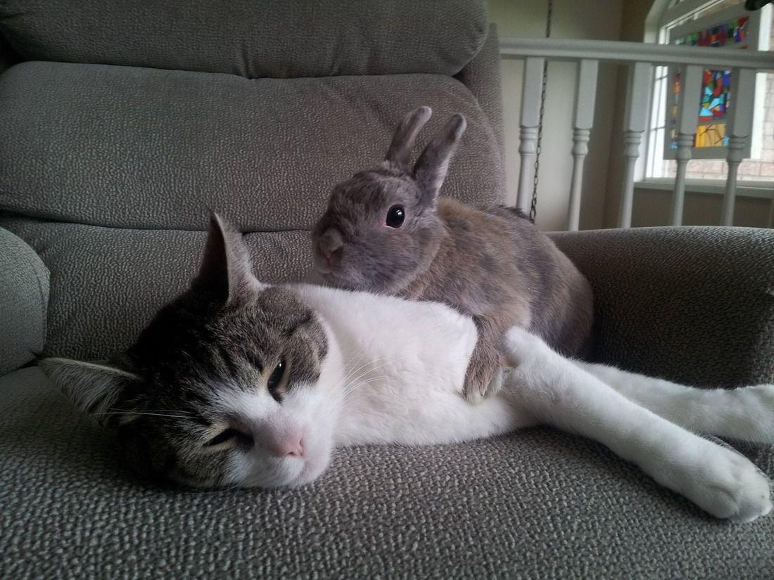 картинки спящего котика и зайчика вместе