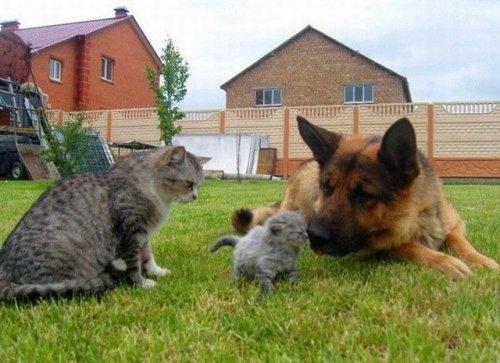 Позитив в фотографиях с животными (39 фото)