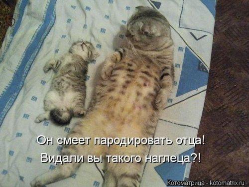 Новые забавные котоматрицы (22 шт)