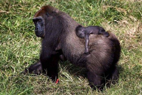 Малыши-животные со своими мамами (18 фото)